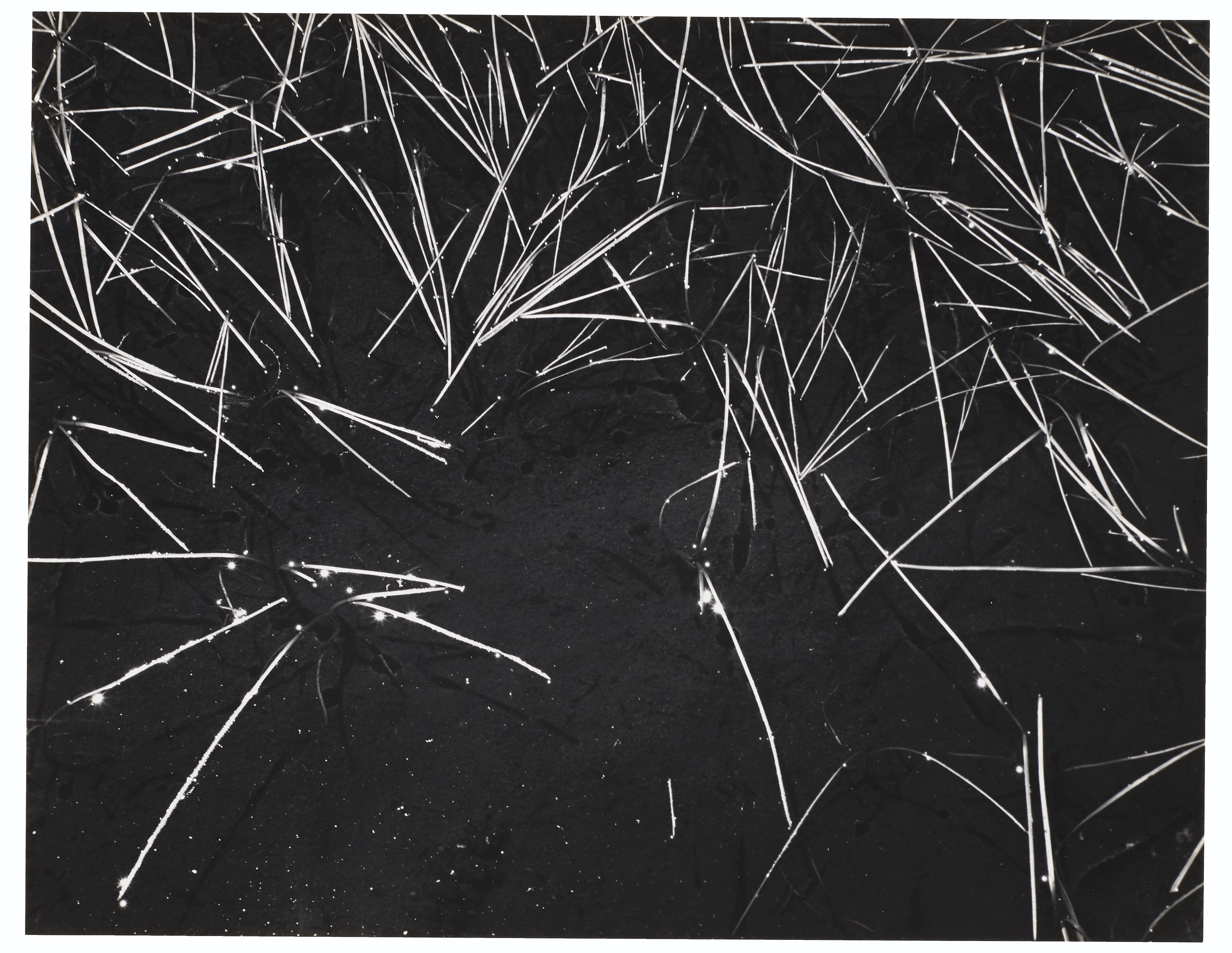 Ansel Adams and the American West: Photographs from the Center for Creative Photography