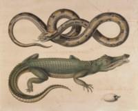 Serpent du Mexique et crocodile du Sénégal