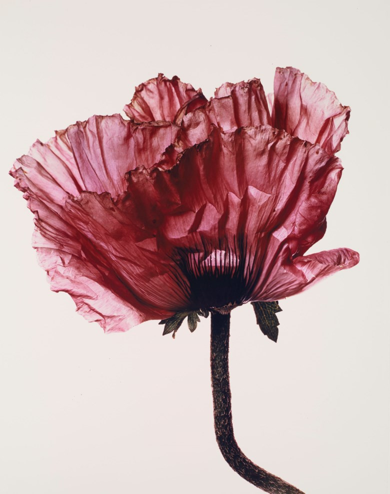 Irving Penn (1917-2009), Lavender Glory Poppy, New York, 1968. Montage 66 x 55.5  cm (26 x 21⅞  in). Estimate €50,000-70,000. Offered in Photographies on 5 November 2019 at Christie's in Paris