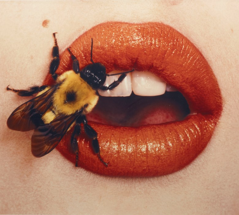 Irving Penn (1917-2009), Bee (A), New York, 1995. Sheetflush mount 69 x 74.5  cm (27⅛ x 29⅜  in). Estimate €40,000-60,000. Offered in Photographies on 5 November 2019 at Christie's in Paris