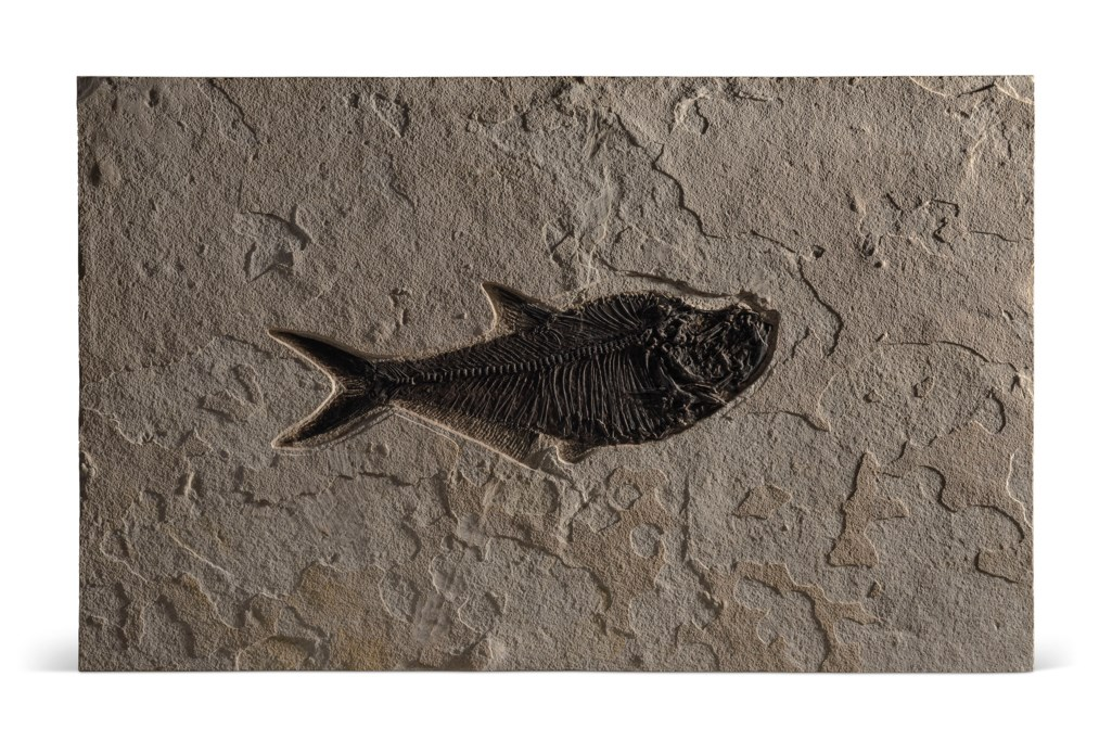A FOSSIL FISH PLAQUE