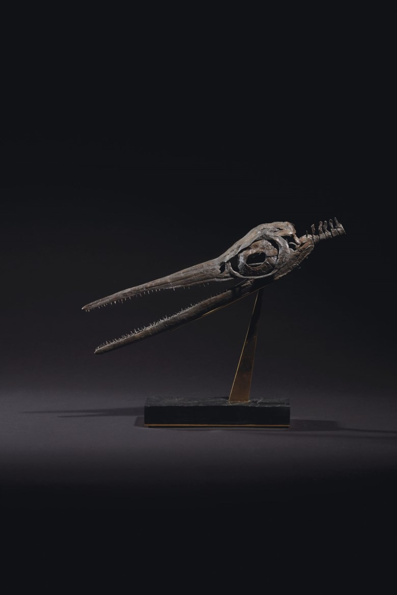 A fossil Ichthyosaur skull, Holzmaden, Germany. 11½ x 15 x 4½ in (29 x 38 x 11.5 cm). Offered in  Sculpted by Nature Fossils, Minerals and Meteorites, 14-28 October 2020, Online
