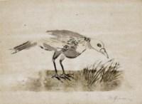 Bird Seeking to Nest