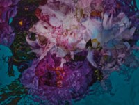 Flower in Water, 6394, 2012