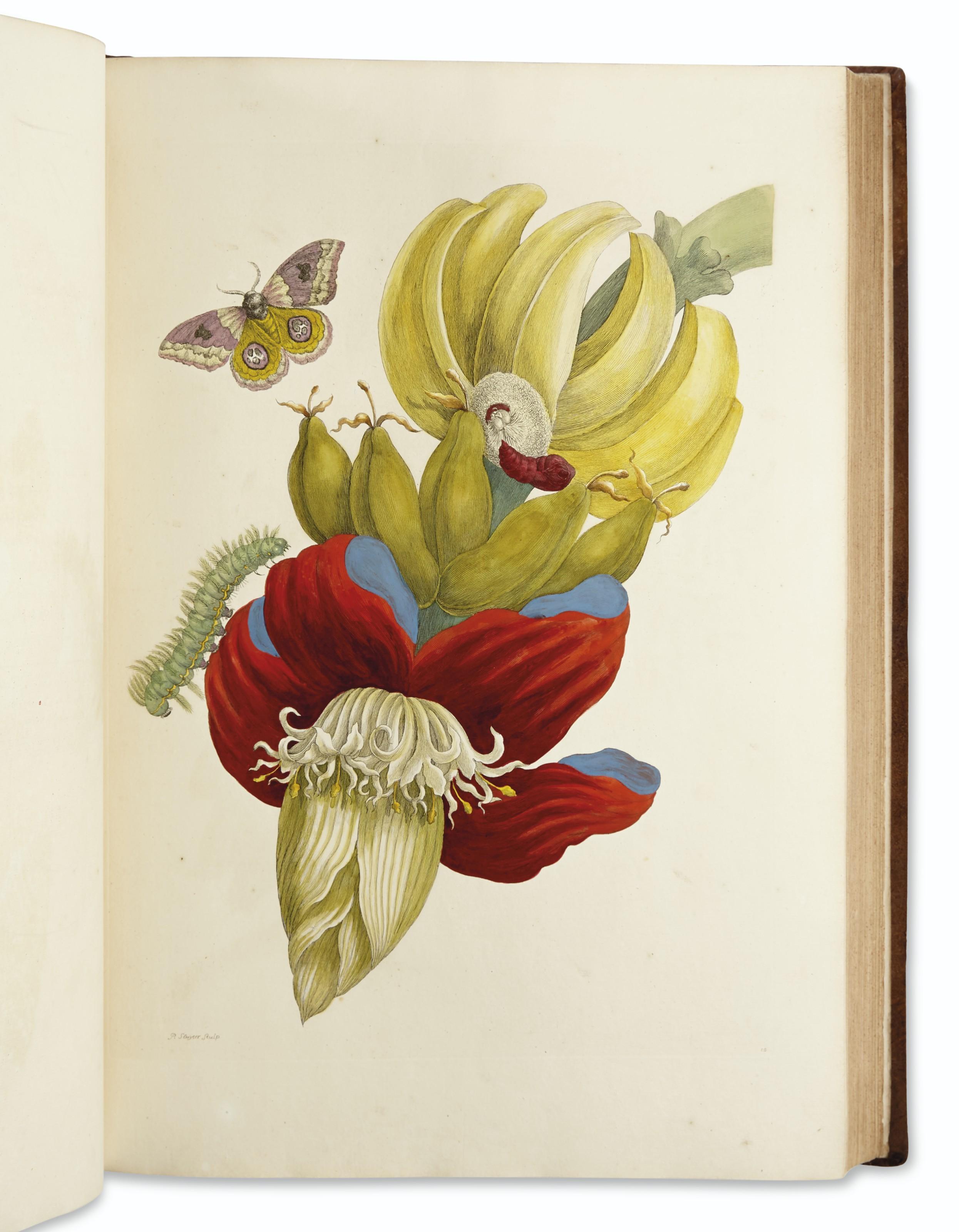 MERIAN, Maria Sibylla (1647-1717). Dissertatio de generatione et metamorphosibus insectorum Surinamensium. Amsterdam: J. Oosterwyk, 1719.