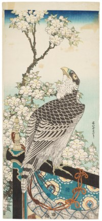 Hawk and cherry blossoms