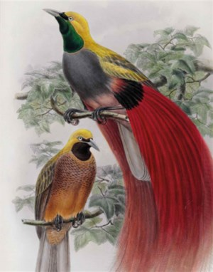 The Ornithological Library of  auction at Christies