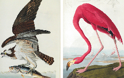 The Portland Audubon Tour