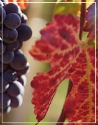 157ème Vente des Vins des Hosp auction at Christies