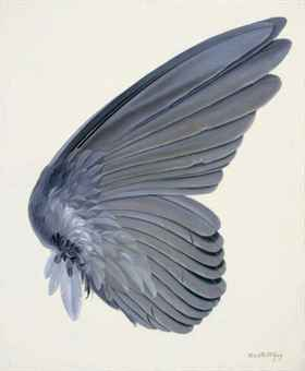 Gray Bird Wing