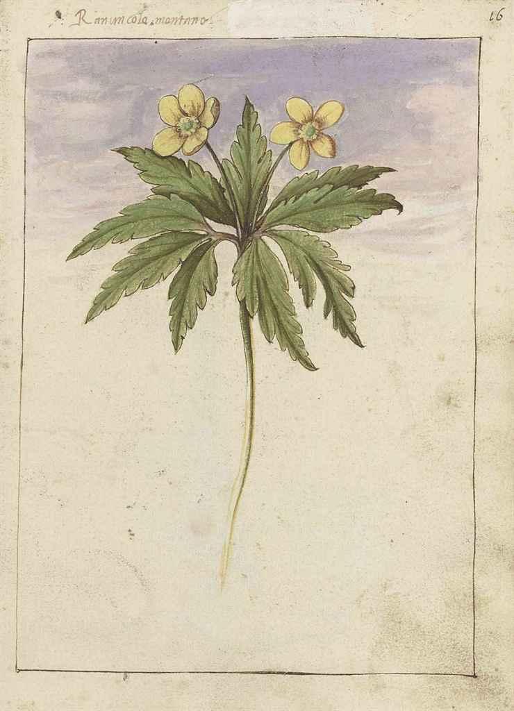 Gherardo Cibo (Genoa 1512-1597