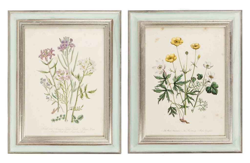 TWELVE COLOURED ENGRAVINGS OF