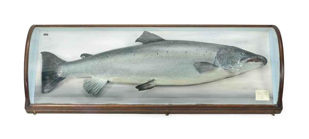 A CASED TAXIDERMY FISHING TROP
