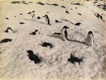 Penguins, Antarctica, c. 1911