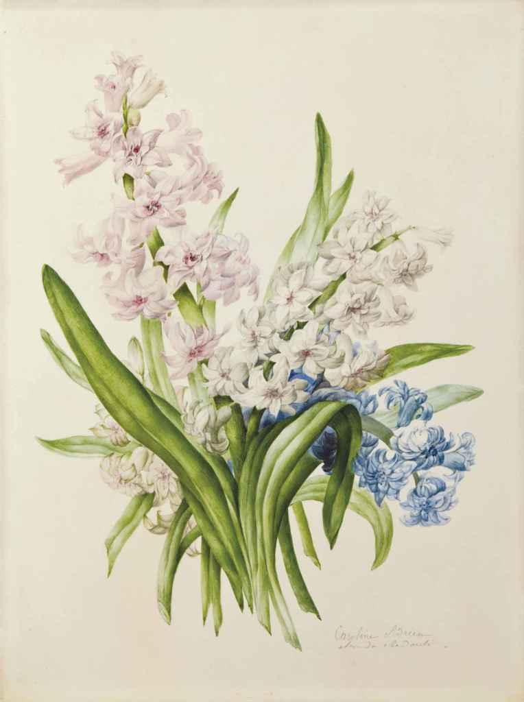 Marie-Caroline ADRIEN (Paris ?-1845) , Jacinthe rose ...