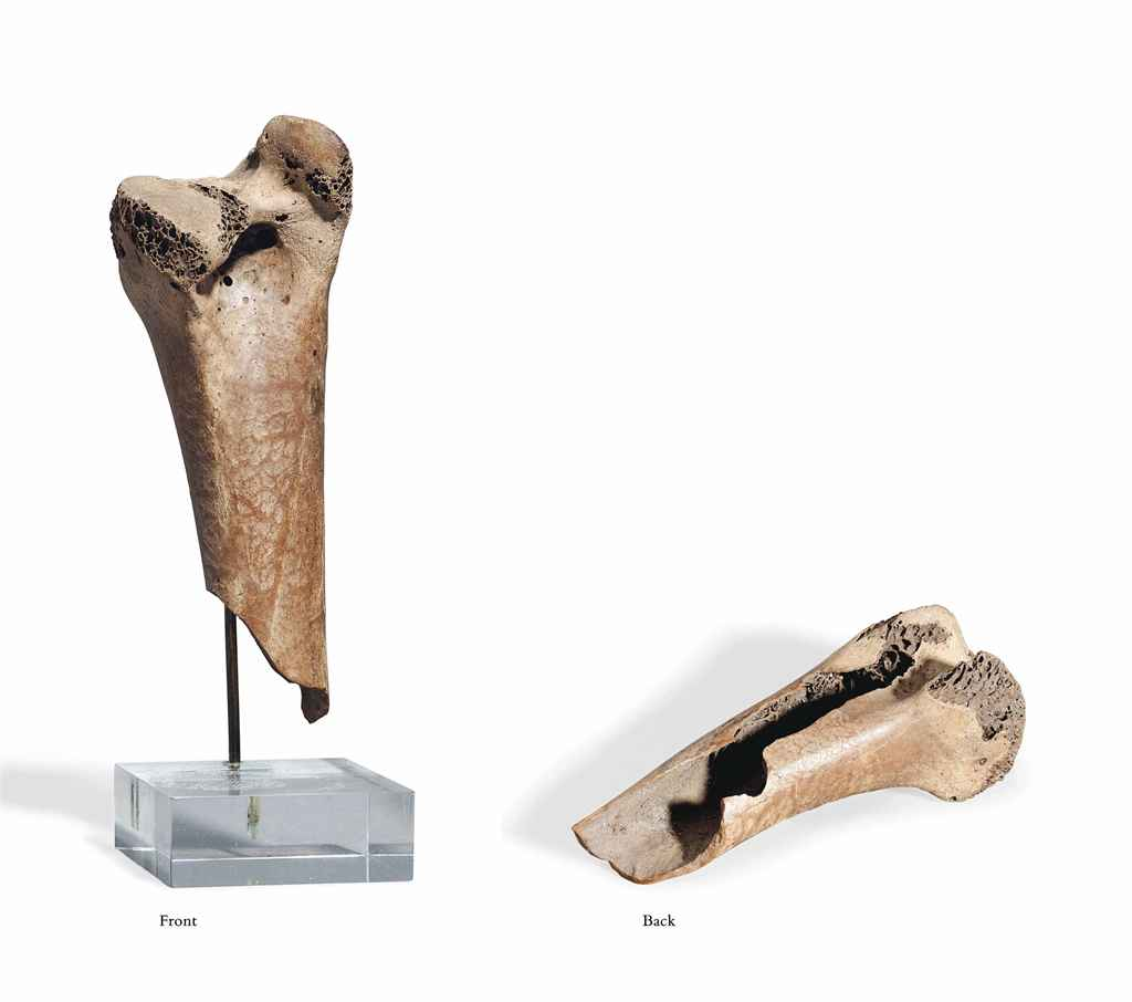 A FRAGMENT OF A DODO FEMUR
