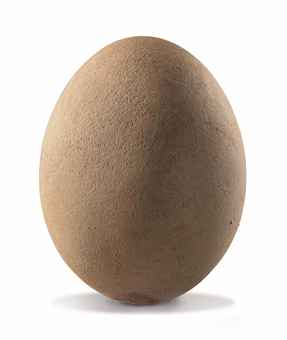 AN ELEPHANT BIRD EGG
