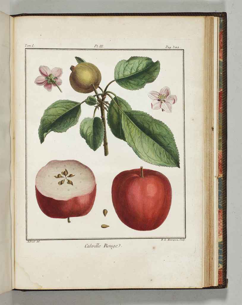 Duhamel du monceau henri louis 1700 1782 trait des for Arbre fruitier