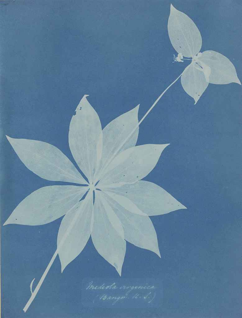 anna atkins essay Anna atkins - anna atkins was an english botanist and photographer she is often considered the first person to publish a book illustrated with photographic images.