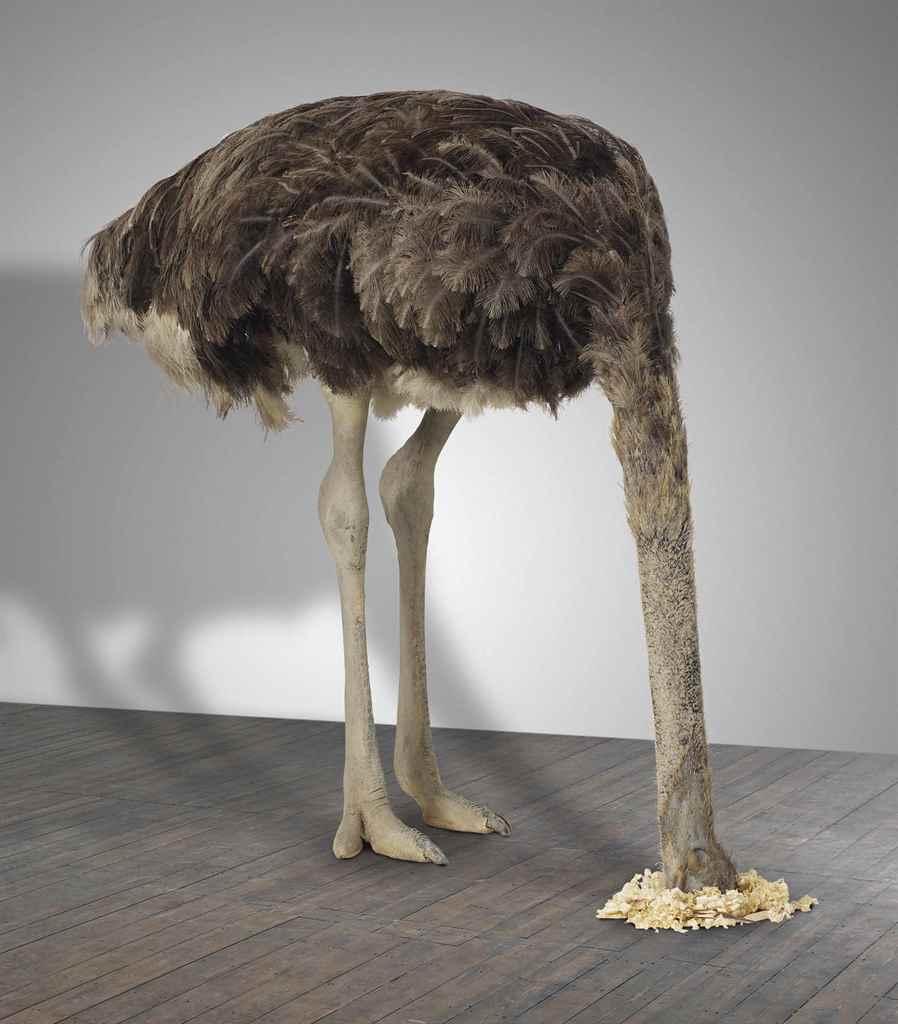 essay of ostrich