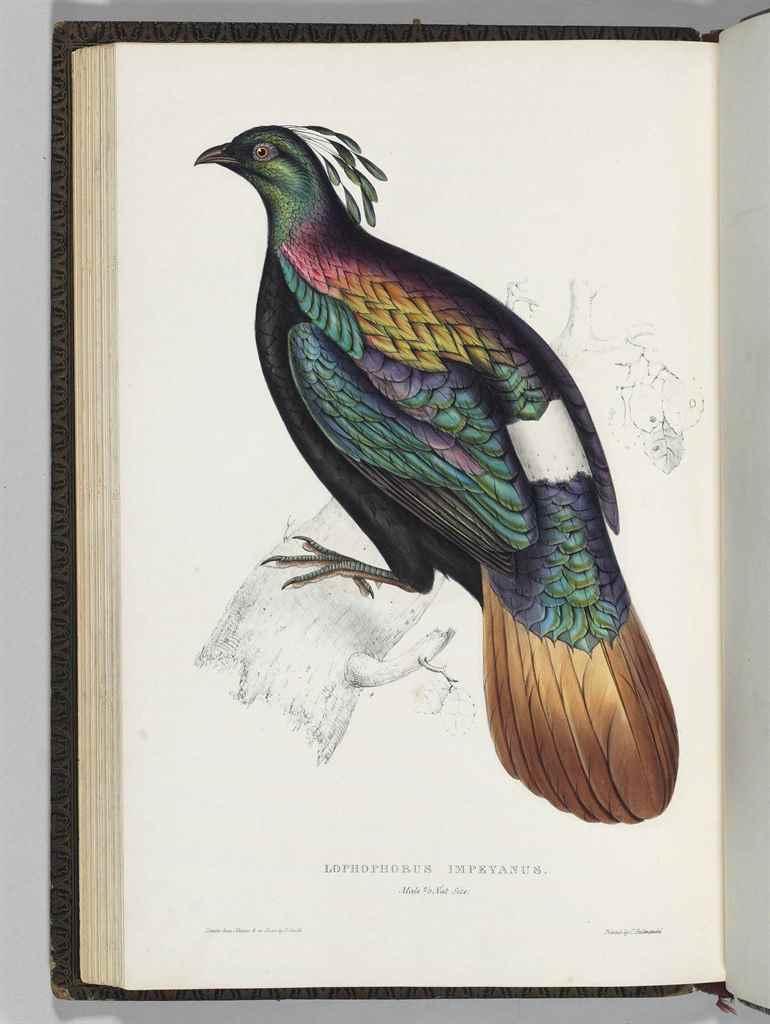 GOULD, John (1804-1881) & Nich