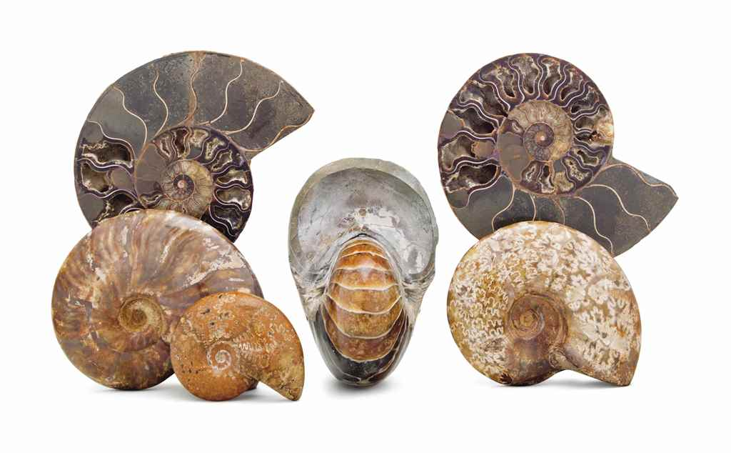 SIX POLISHED FOSSIL SPECIMENS