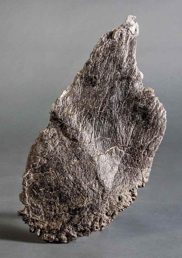 A STEGOSAURUS PLATE