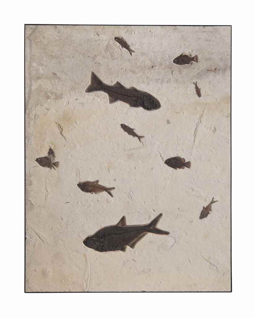 A PLAQUE OF ELEVEN FISH