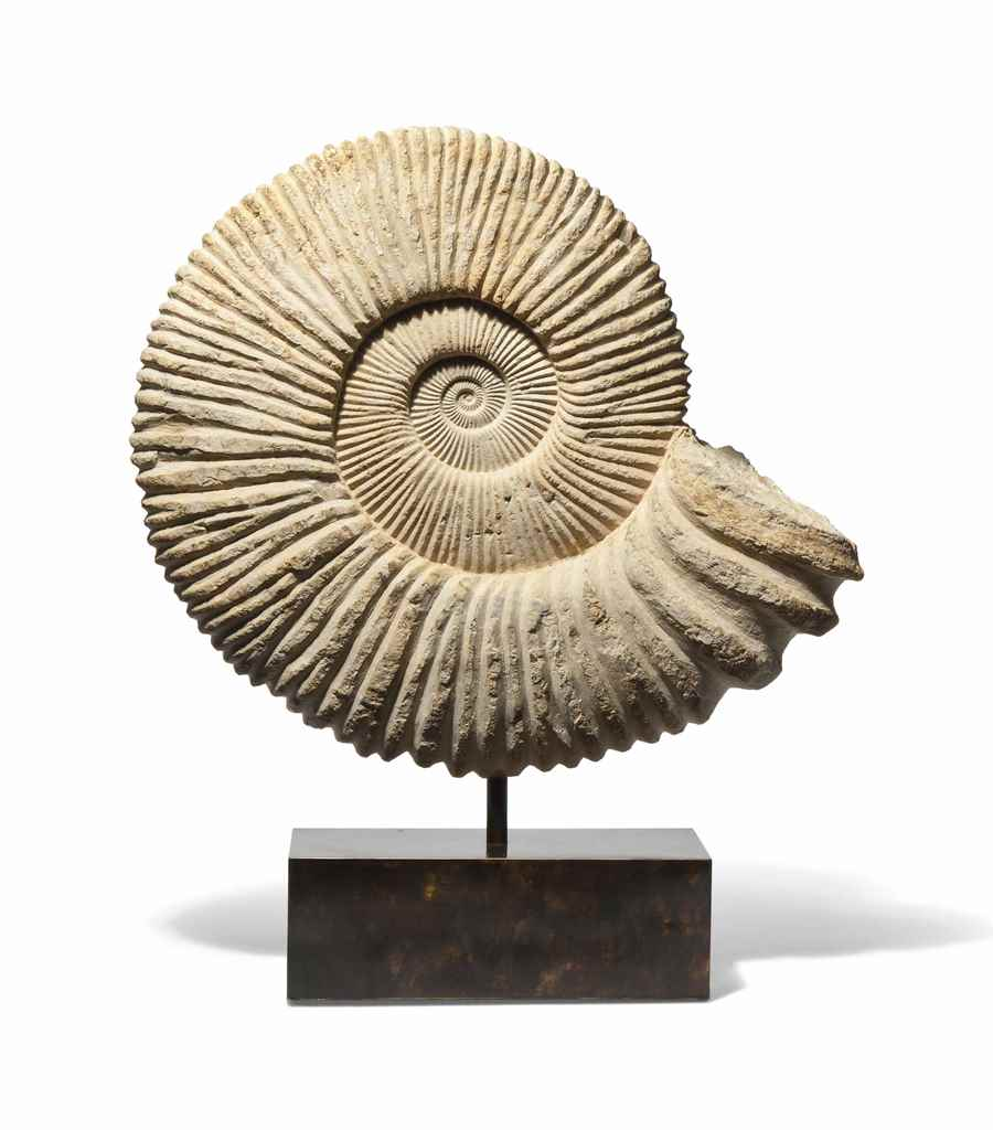 A VERY LARGE CARVED AMMONITE
