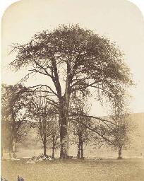 Etude d'un arbre