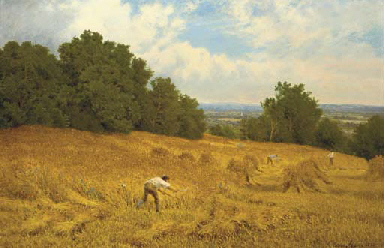 Harvesting, Surrey