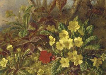 Primroses and brambles
