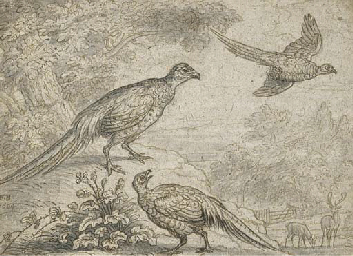 Pheasant in a wooded landscape