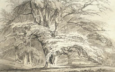 Beech Trees at Cassiobury Park