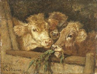 Vitelli nella stalla, 1897