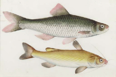 four Chinese paintings of fish