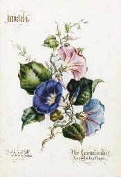 Flower Painting in Twelve Prog