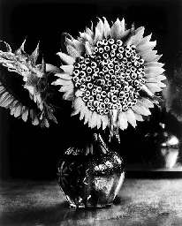 Sunflowers and Sardines; and M