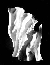 Photo Theory on Making Sculptu