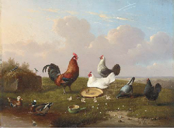 Poultry in a landscape at spri