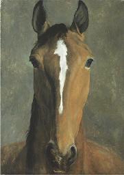 Head of a bay horse
