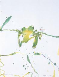 Kimberley Tree Frog