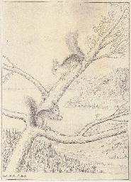 Zwei Eichhörnchen, 1948