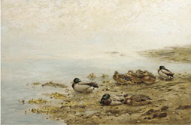 Mallards at the water's edge