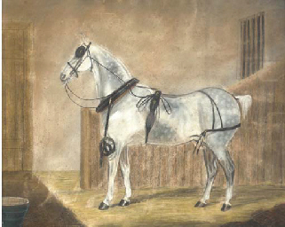 A harnessed grey in a stable