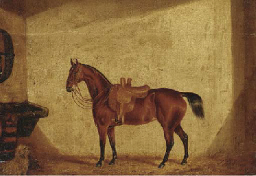 A saddled bay horse in a stabl