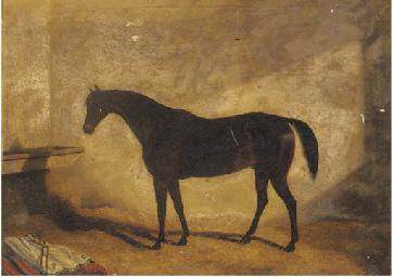 A dark brown hunter in a stabl