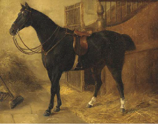 A black hunter in a stable