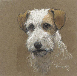 Head of a wirehaired terrier