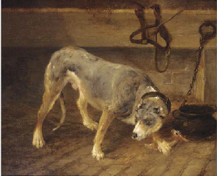 A tethered dog in a stable